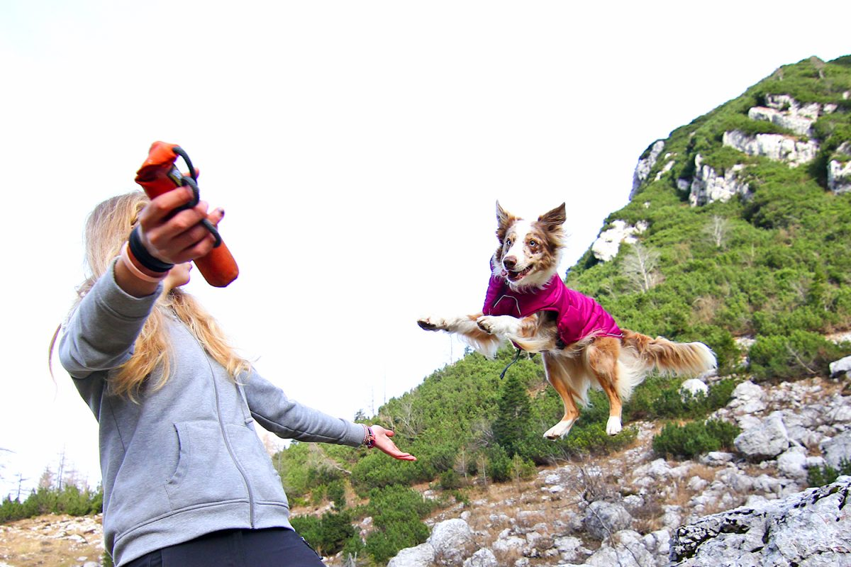 Adventure equipment for dogs by Ruffwear